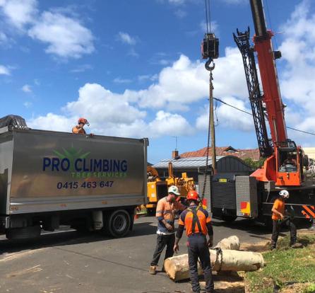Pro Climbing Tree Services